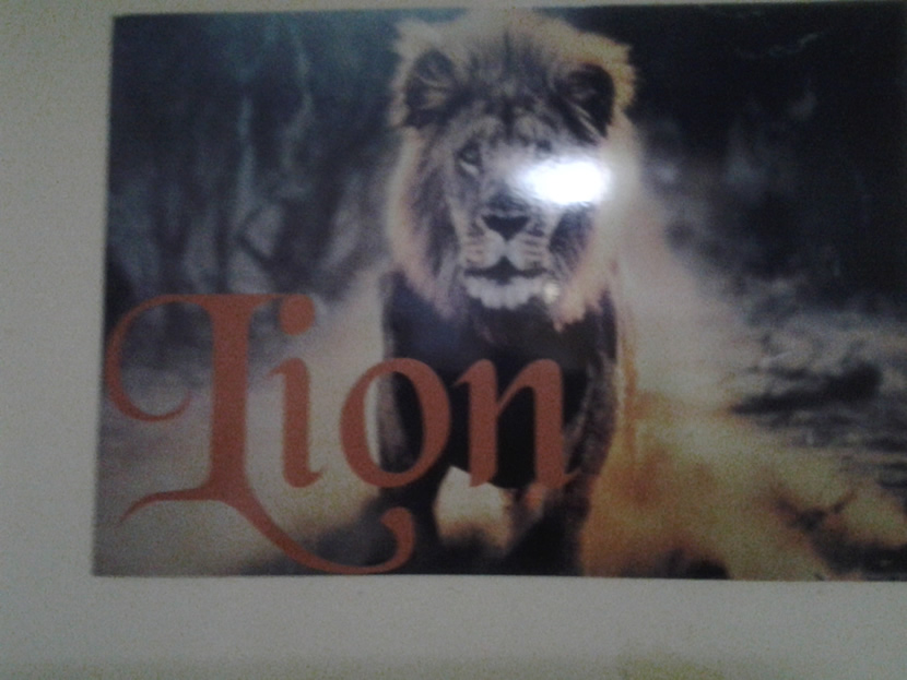 Lion Suite Gallery